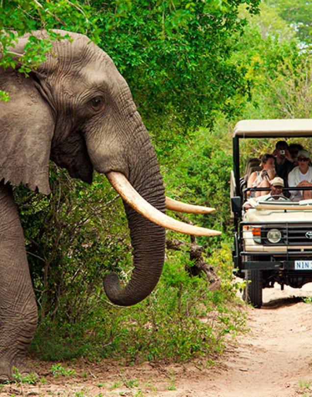 Sudafrica + Safari & Playas